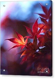 Acer Kaleidoscope Acrylic Print