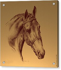 Achilles Acrylic Print by Laurie Musser
