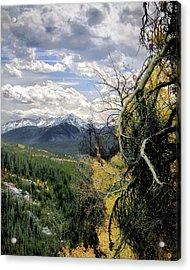 Acorn Creek Trail Acrylic Print
