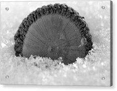 Acorn Acrylic Print by Shawn Wood