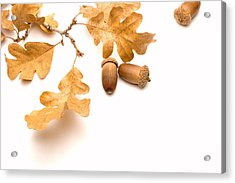 Acorns And Oak Leaves Acrylic Print by Utah Images