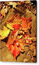 Acrylic Print featuring the photograph Acorns Fall Maple Leaf by Meta Gatschenberger