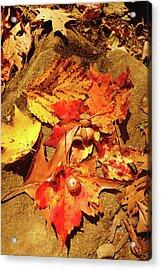 Acorns Fall Maple Leaf Acrylic Print