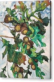 Acorns On An Oak  Acrylic Print