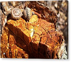 Acorns - The Cycle Of Life Continues  Acrylic Print