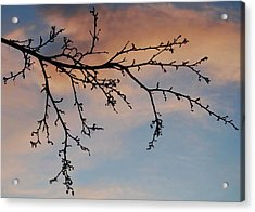 Acrylic Print featuring the photograph Across A December Sky by Marilynne Bull