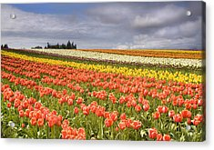 Across Colorful Fields Acrylic Print by Mike  Dawson