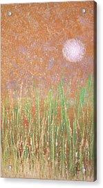 Across The Marsh Acrylic Print by Steve Ellis
