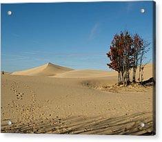 Acrylic Print featuring the photograph Across The Sand 2 by Tara Lynn