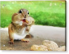 Addicted To Nuts Acrylic Print by Lori Deiter