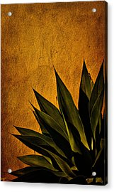 Adobe And Agave At Sundown Acrylic Print