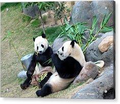Adorable Pandas Acrylic Print by Ming Yeung
