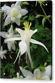 Acrylic Print featuring the photograph Adoration by Carol Sweetwood