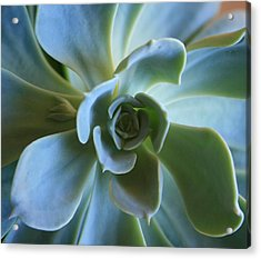 Acrylic Print featuring the photograph Aeonium by Marna Edwards Flavell