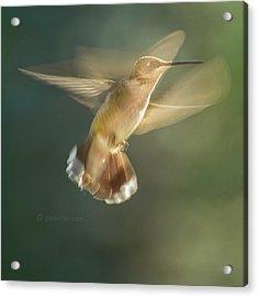 Aerial Dancing.... Acrylic Print