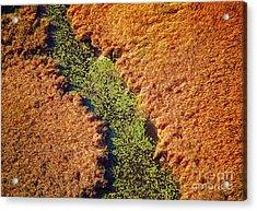 Aerial Farm Stream Lillies  Acrylic Print