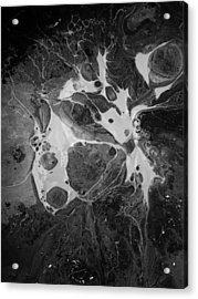 Aerial Photo Vulture Beak Yawn Acrylic Print