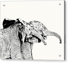Affectionate Young Elephant Pair Acrylic Print