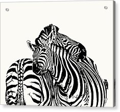 Affectionate Zebra Pair Acrylic Print