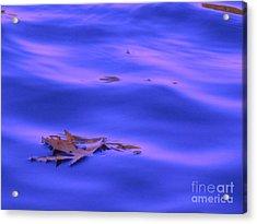 Afloat Acrylic Print by Sybil Staples