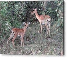 Africa - Animals In The Wild 2 Acrylic Print by Exploramum Exploramum