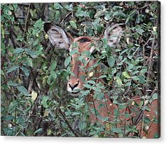 Africa - Animals In The Wild 4 Acrylic Print