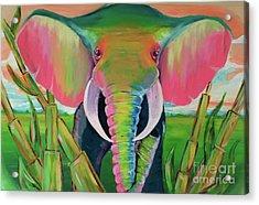Africa Acrylic Print by Mark Ashkenazi