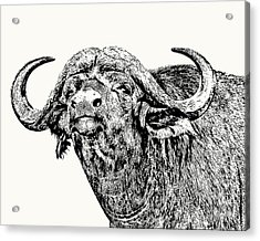 African Buffalo Bull Portrait Acrylic Print