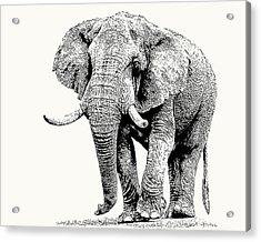 African Bull Elephant With Fine Tusks Acrylic Print