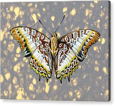 African Butterfly Acrylic Print by Mindy Lighthipe