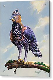 African Crowned Eagle  Acrylic Print by Anthony Mwangi