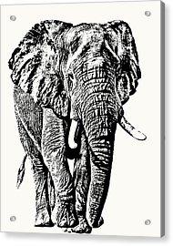 African Elephant Bull, Full Figure Acrylic Print