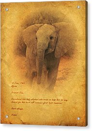 Acrylic Print featuring the mixed media African Elephant by John Wills