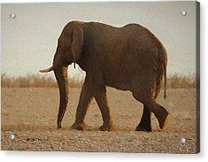 African Elephant Walk Acrylic Print by Ernie Echols