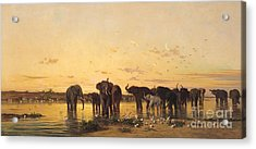 African Elephants Acrylic Print by Charles Emile de Tournemine