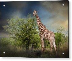 African Giraffe Acrylic Print