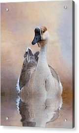 Acrylic Print featuring the photograph African Goose by Robin-Lee Vieira