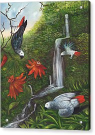 African Grays Acrylic Print