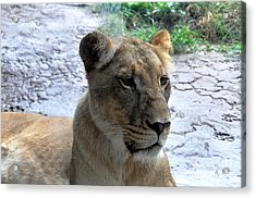 Acrylic Print featuring the photograph African Queen by John Black