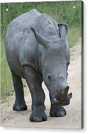 African Rhino Acrylic Print