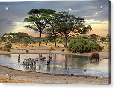 African Safari Wildlife At The Waterhole Acrylic Print