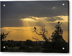 African Sunset 2 Acrylic Print by Kathy Adams Clark
