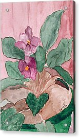 African Violet Acrylic Print by Margie  Byrne