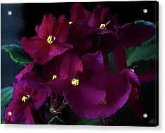 Acrylic Print featuring the photograph African Violets Photo Art by Sharon Talson