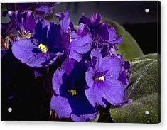 Acrylic Print featuring the photograph African Violets by Phyllis Denton