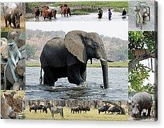 African Wildlife Montage - Elephant Acrylic Print