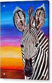 African Zebra Aura Acrylic Print by Donna Proctor