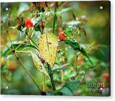 Acrylic Print featuring the photograph After An Autumn Rain by Kerri Farley
