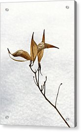 After Setting Seed Acrylic Print