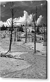 Acrylic Print featuring the photograph After The Fire by Nigel Fletcher-Jones